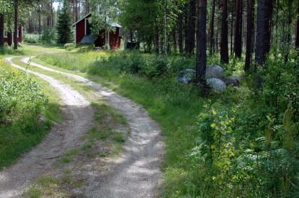 Åkerbären trivs längs gamla vägrenar.
