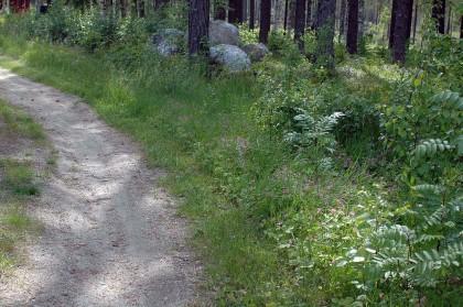 Åkerbärsblommning i Sunnansjö.